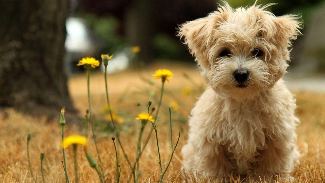 amazing-dog-facts-3